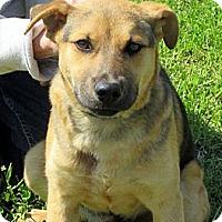 Adopt A Pet :: DILLON - Glastonbury, CT
