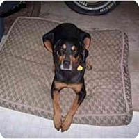 Adopt A Pet :: Hope - Cuddebackville, NY