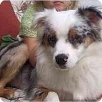 Adopt A Pet :: Apollo - Orlando, FL