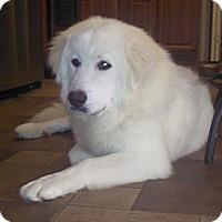 Adopt A Pet :: Luna *Adopted - Tulsa, OK