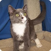Adopt A Pet :: K-Hirsh4-Leroy - Colorado Springs, CO