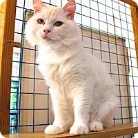 Adopt A Pet :: Snow - Davis, CA