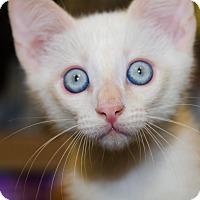 Adopt A Pet :: Bennett - Irvine, CA