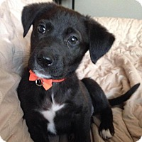 Adopt A Pet :: Tulip - Saskatoon, SK