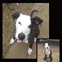 Adopt A Pet :: Sissy - Madison, AL