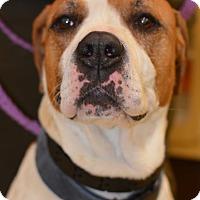 Adopt A Pet :: Macho - Ogden, UT