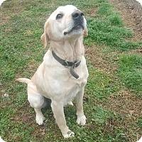 Adopt A Pet :: Lola - Waxhaw, NC