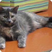 Domestic Shorthair Cat for adoption in Cocoa, Florida - Lexi (Cocoa Center)