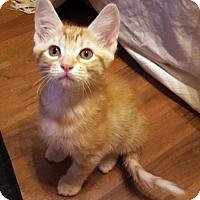 Adopt A Pet :: Ozzy - Dallas, TX