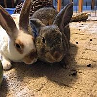Adopt A Pet :: Peter - San Antonio, TX