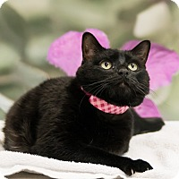 Adopt A Pet :: Inky - Houston, TX