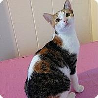 Adopt A Pet :: Callie - Makawao, HI