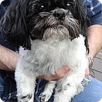 Adopt A Pet :: Libby - Shawnee Mission, KS