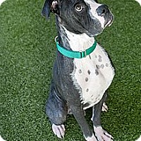 Adopt A Pet :: Louie - Mission Viejo, CA