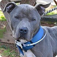 Adopt A Pet :: Cy - Athens, GA