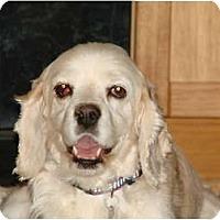 Adopt A Pet :: June Bug - Chandler, AZ