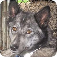 Adopt A Pet :: Echo - Kettle Falls, WA