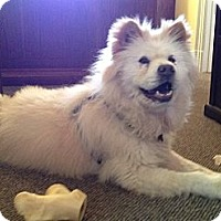 Adopt A Pet :: Waffles - Richmond, VA