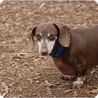 Adopt A Pet :: Nike - Ft. Myers, FL