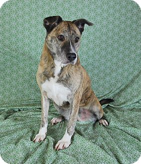 Terrier (Unknown Type, Medium) Mix Dog for adoption in Jackson, Mississippi - Audrey