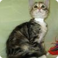 Adopt A Pet :: Hillary - Powell, OH