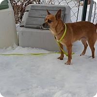 Adopt A Pet :: BoBo - Meridian, ID