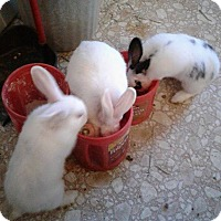 Adopt A Pet :: Babies 1,2,3 - Palm Coast, FL