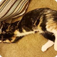Adopt A Pet :: Momo - Chandler, AZ