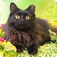 Adopt A Pet :: Luna - Sterling Heights, MI