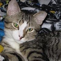 Adopt A Pet :: Blaze - Renfrew, PA