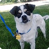 Adopt A Pet :: Gavin - Auburn, CA