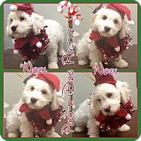 Adopt A Pet :: Noel - South Gate, CA