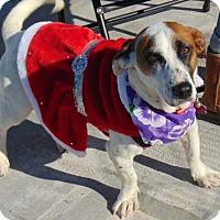 Adopt A Pet :: Christmas - San Diego, CA