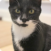 Adopt A Pet :: Carol - Carlisle, PA