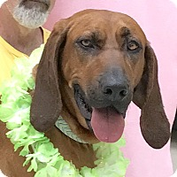 Adopt A Pet :: Daisy - Evansville, IN