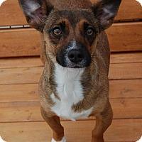 Adopt A Pet :: Billie Jean - Fort Wayne, IN