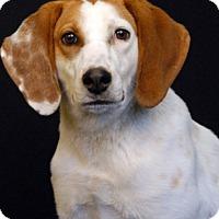 Adopt A Pet :: Virgil - Newland, NC