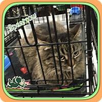 Adopt A Pet :: Spearrow - Harrisburg, NC