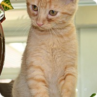 Adopt A Pet :: Peppie - Salisbury, NC