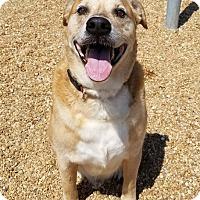 Adopt A Pet :: 1705-1748 Bo - Virginia Beach, VA
