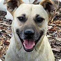 Adopt A Pet :: ALLEY - Glastonbury, CT