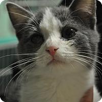 Adopt A Pet :: Hunter - Rockaway, NJ