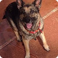 Adopt A Pet :: Libby - Pompano Beach, FL