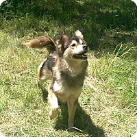 Adopt A Pet :: Freedom - ADOPTED!! - Antioch, IL