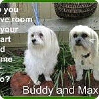 Adopt A Pet :: Maxie and Buddy - Shawnee Mission, KS