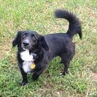 Dachshund Mix Dog for adoption in Winder, Georgia - Diego