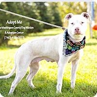 Adopt A Pet :: Amelia - Urgent! - Zanesville, OH