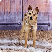 Adopt A Pet :: Sarge - Lubbock, TX