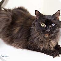 Adopt A Pet :: Charlotte - Merrifield, VA