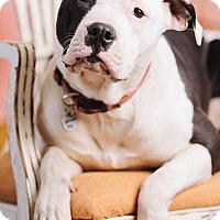 Adopt A Pet :: Fresca - Portland, OR